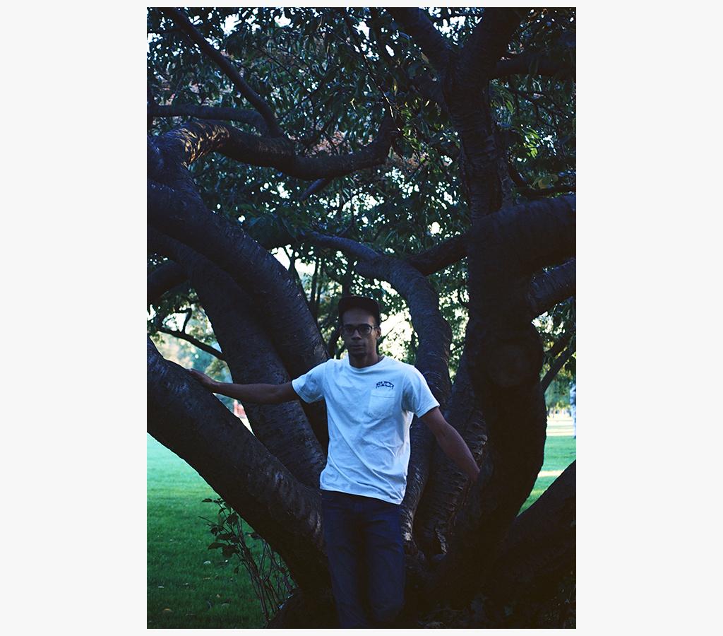 chrrtree.jpg